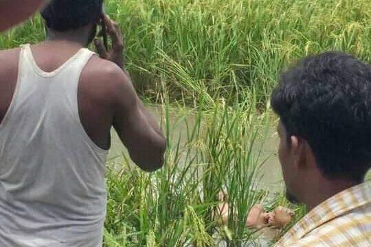 ব্রাহ্মণবাড়িয়ায় কৃষি জমিতে মিললো শিশুর গলাকাটা লাশ
