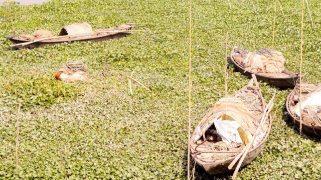 বাঞ্ছারামপুর-হোমনায় মরে যাচ্ছে তিতাসের শাখা নদী